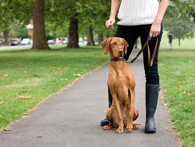 86529856-choosing-a-pet-sitter-632x475