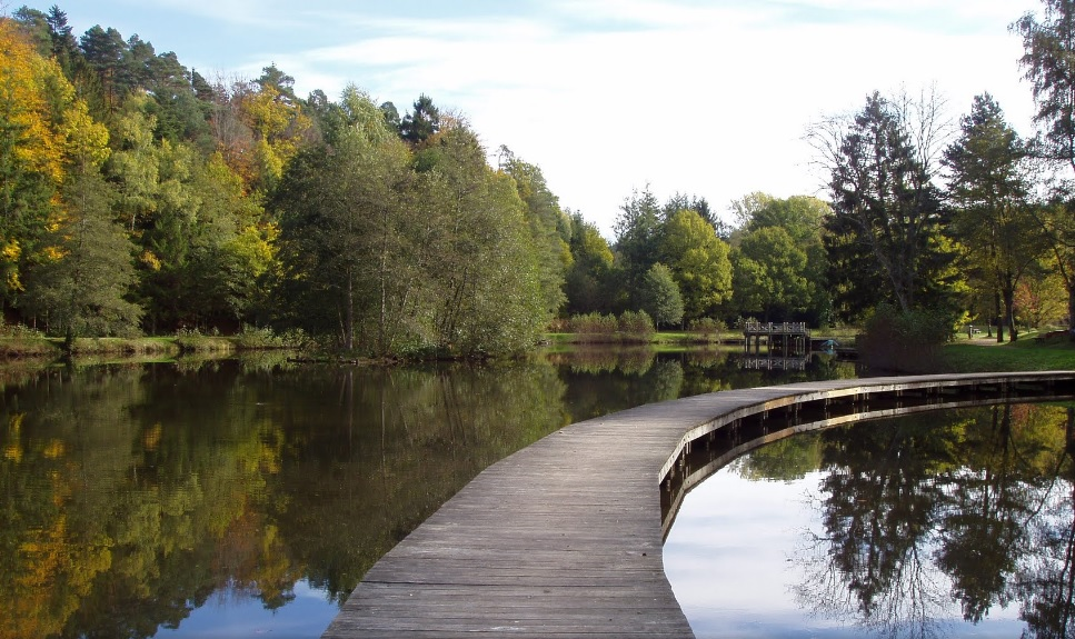 Etang de Pointhaie Bruyères (Photo google map)