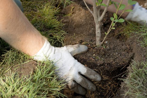 plantation_arbres