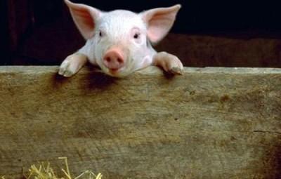 autres-animaux-autres-animaux-de-ferme-lille-france-8793908954-506121