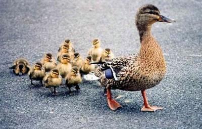 les-bebes-animaux-de-la-ferme-21_248943-L