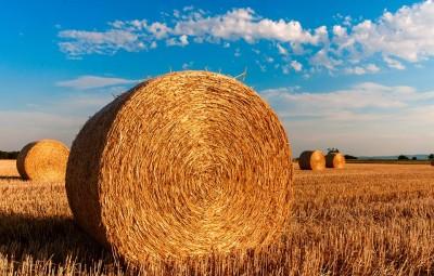 agriculture-paille-ferme