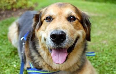 dog-1535905_960_720