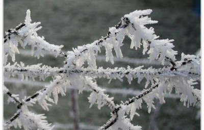 gel-e-blanche-sur-grillage