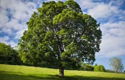 mariage-arbre
