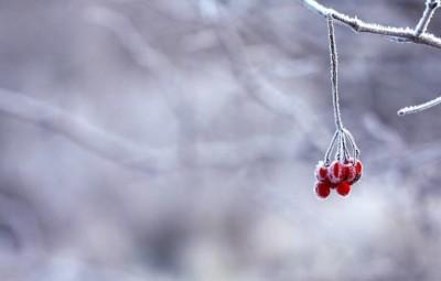 frozen-201495_960_720