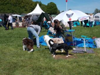 17.05.21-Exposition-canine-Vittel-004