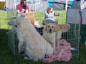 17.05.21-Exposition-canine-Vittel-005