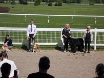 17.05.21-Exposition-canine-Vittel-052