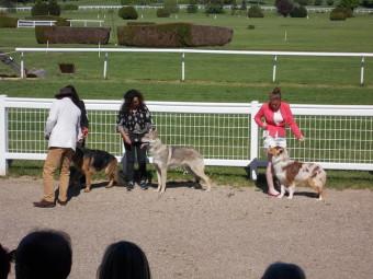17.05.21-Exposition-canine-Vittel-057