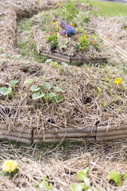 jardin-partage-petite-mouche (3)