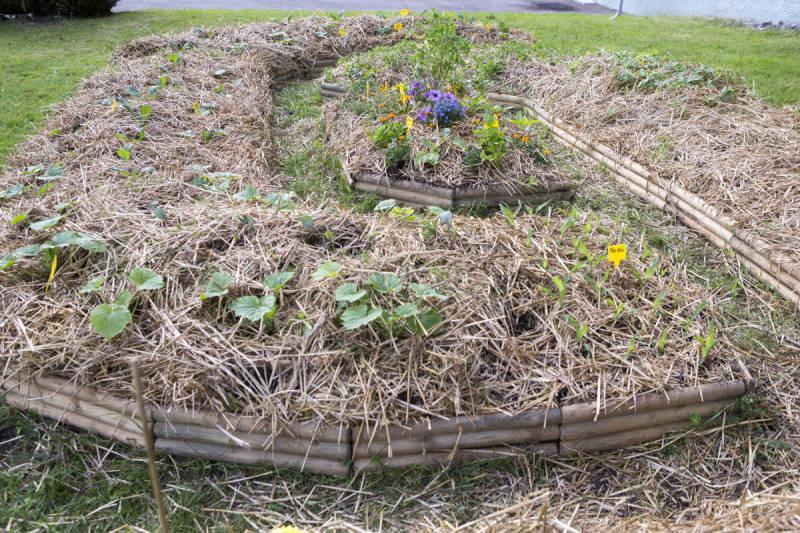 jardin-partage-petite-mouche (4)