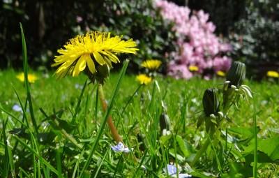 meadow-43467_960_720