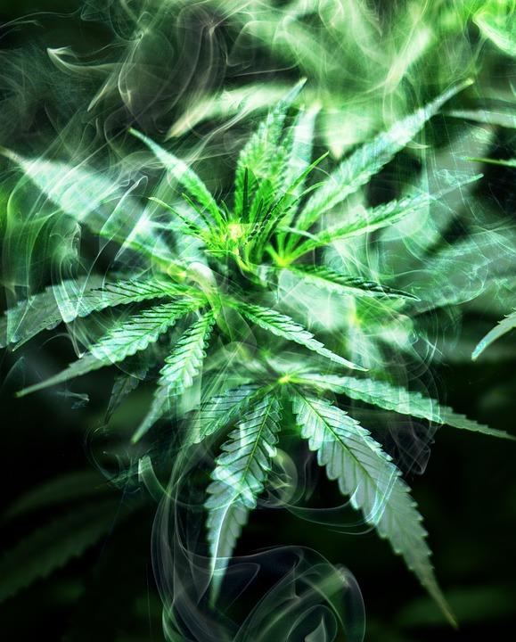 cannabis-2186917_960_720