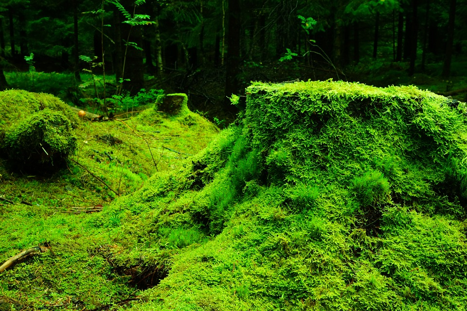 forest-483206_960_720