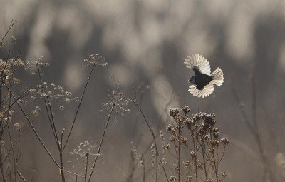 Photographie Vincent Munier