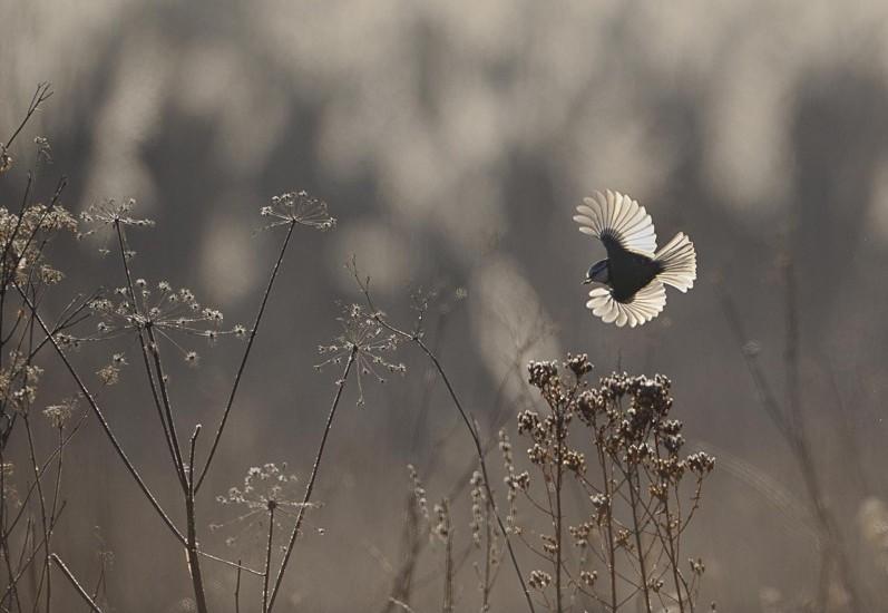 Photographie Vincent Munier