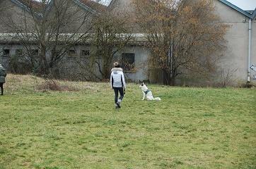 Cynolor pour l'amour des chiens-charmes (3)