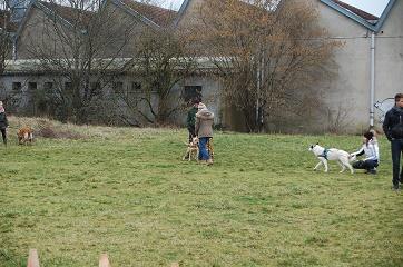 Cynolor pour l'amour des chiens-charmes (4)