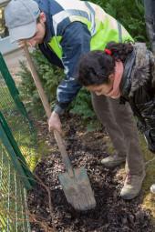 plantation-d-arbres-saut-le-cerf-Epinal (5)