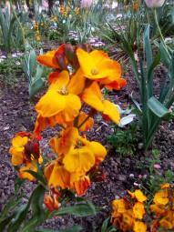fleurissement-epinal.3jpg