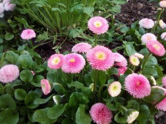 fleurissement-epinal.4jpg