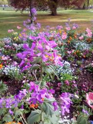 fleurissement-epinal.6jpg
