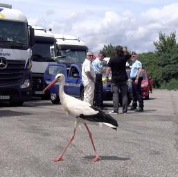Le Camion en Alsace 3