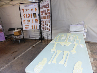 fouilles-archeologiques-epinal (2)