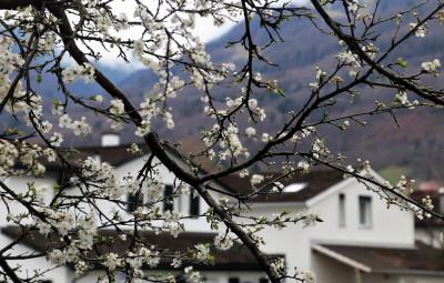 tree-3286217_960_720