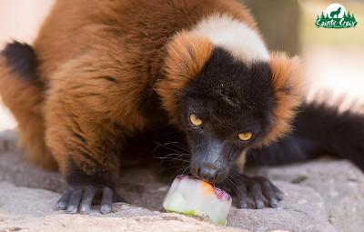 (photographies Parc animalier de Sainte-Croix)