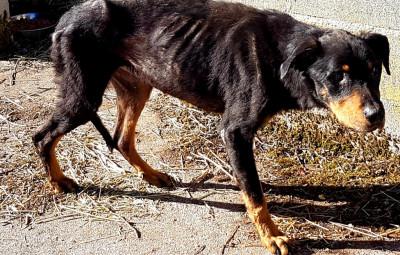 Les chiens vivaient dans des conditions insalubres et sans être nourris correctement. (Crédits photographiques SPA Déodatienne)