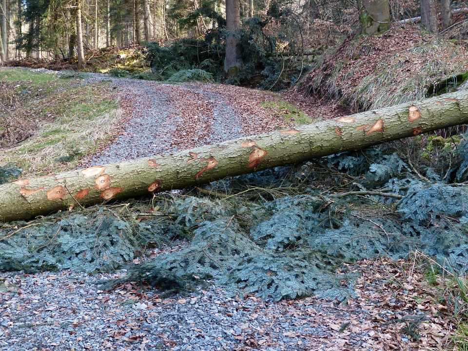 (photographie d'archives)