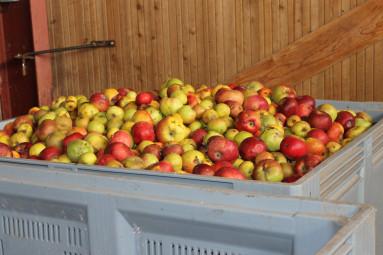 enerjus-anglemont-jus-de-fruits-legumes-vosges (4)
