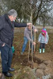 arbres-fruitiers-dogneville (1)