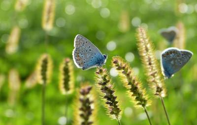 butterfly-3934592_960_720