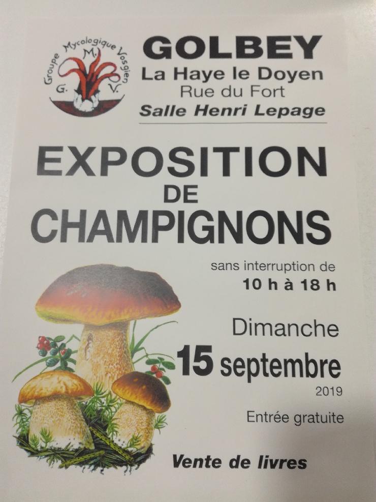 expo-champignon (2)