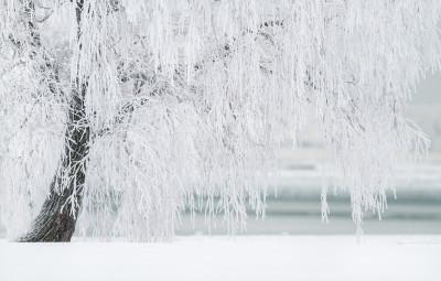 winter-1367153_1920