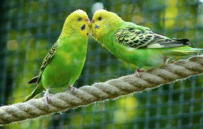 oiseaux-exotiques