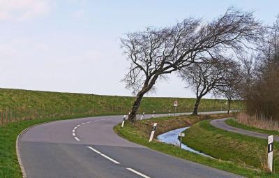 vent-arbre
