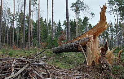 vent-arbre-the-broken-barrel-3079715_1280-1024x682