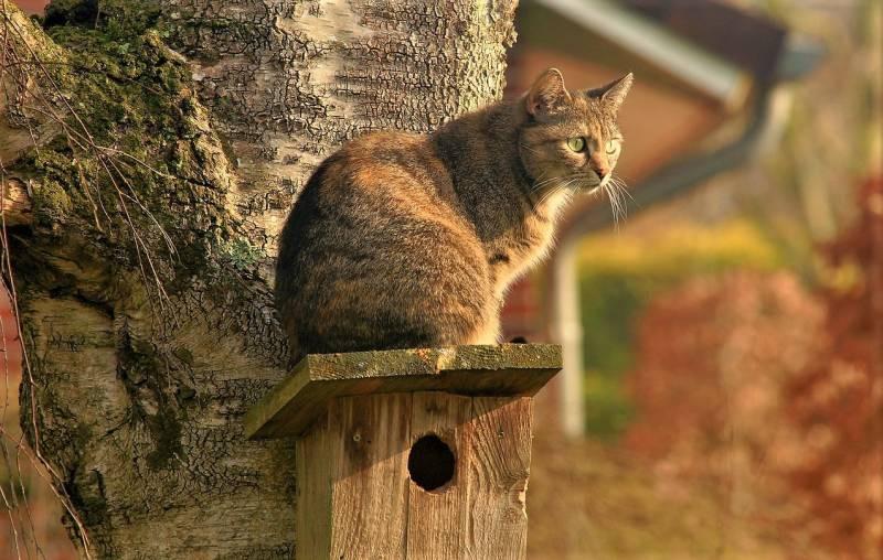 cat-2195538_1280