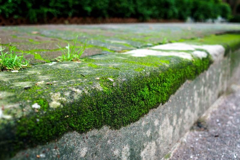 Désherbage des trottoirs : rappel des obligations des particuliers