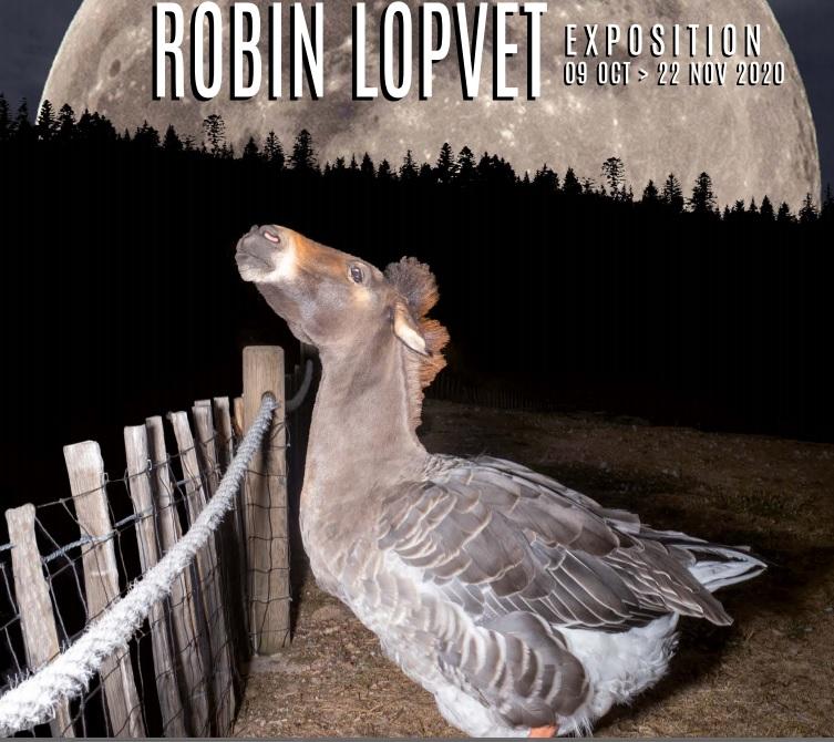 robin-lopvet