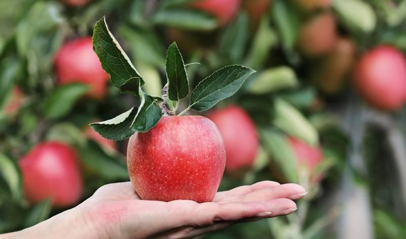 apple-2788662_1920